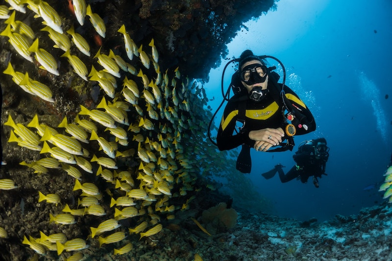 Underwater Scene with 2 Divers and Yellow Fish